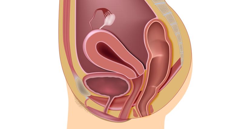 Ilustração do pélvis feminina | Instituto Kemp